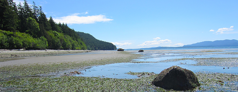 low tide on lummi island in the san juan islands